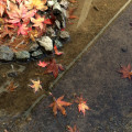 小学校の前庭で。小さな秋、み~つけた♪