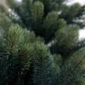 今年新調♪ RS GLOBAL TRADE(グローバルトレード)社のクリスマスツリーは、ボリュームがあって素敵です(´▽`*)