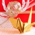 小学生の卒業式。袴を買うか借りるか、迷ってきました(><)